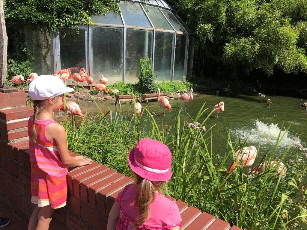 Zoo Osnabrück mit Kindern - Flamingos