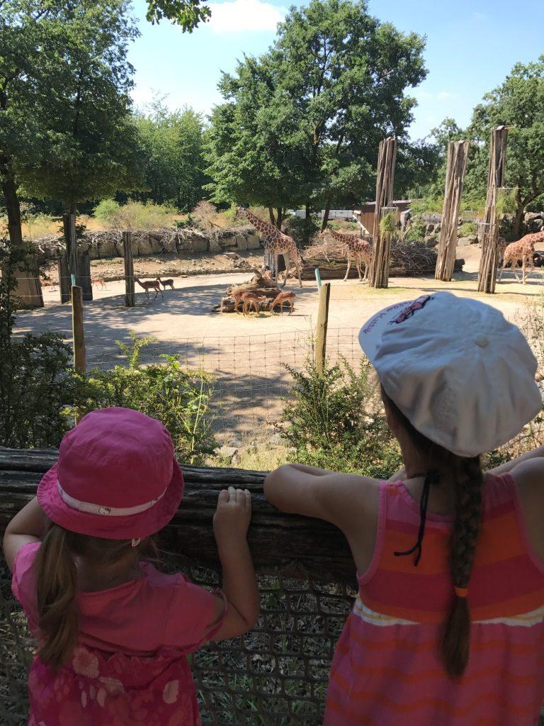 Zoo Osnabrück mit Kindern - Giraffen