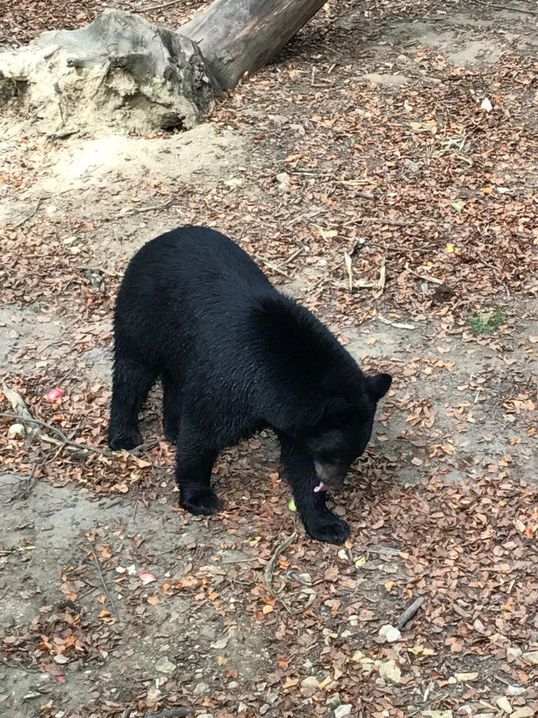 Zoo Osnabrück mit Kindern - Schwarzbär