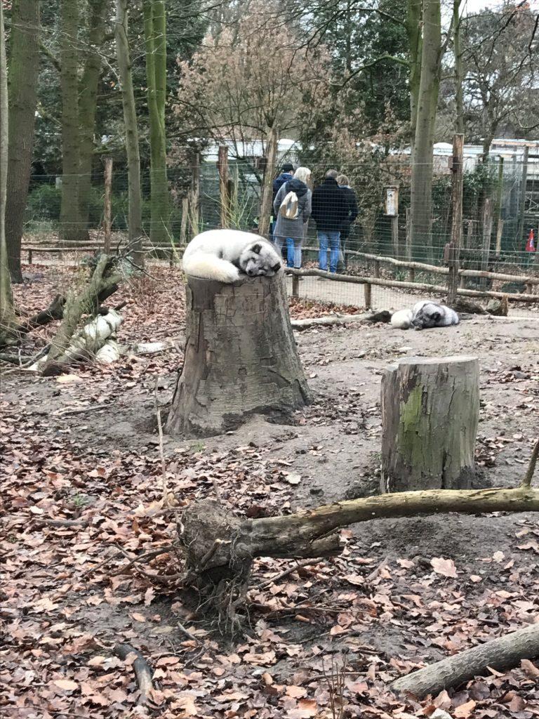 Zoo Osnabrück mit Kindern