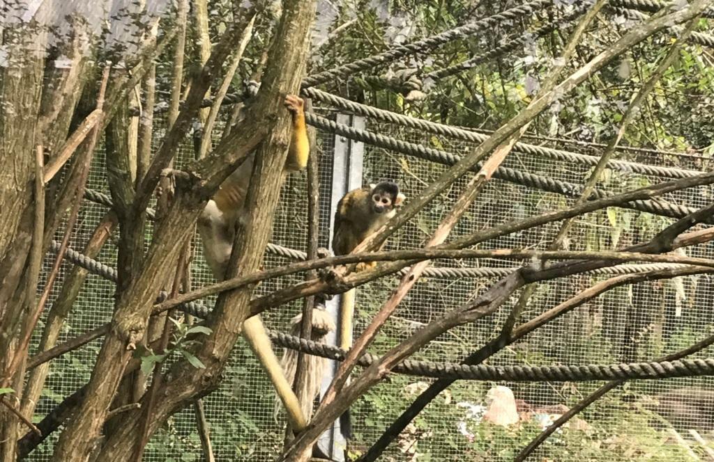 Zoo Osnabrück mit Kindern - Affen