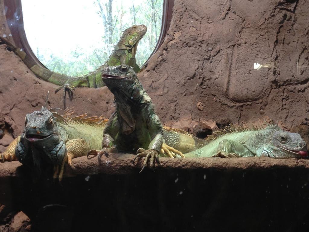 Zoo Osnabrück mit Kindern - Leguan