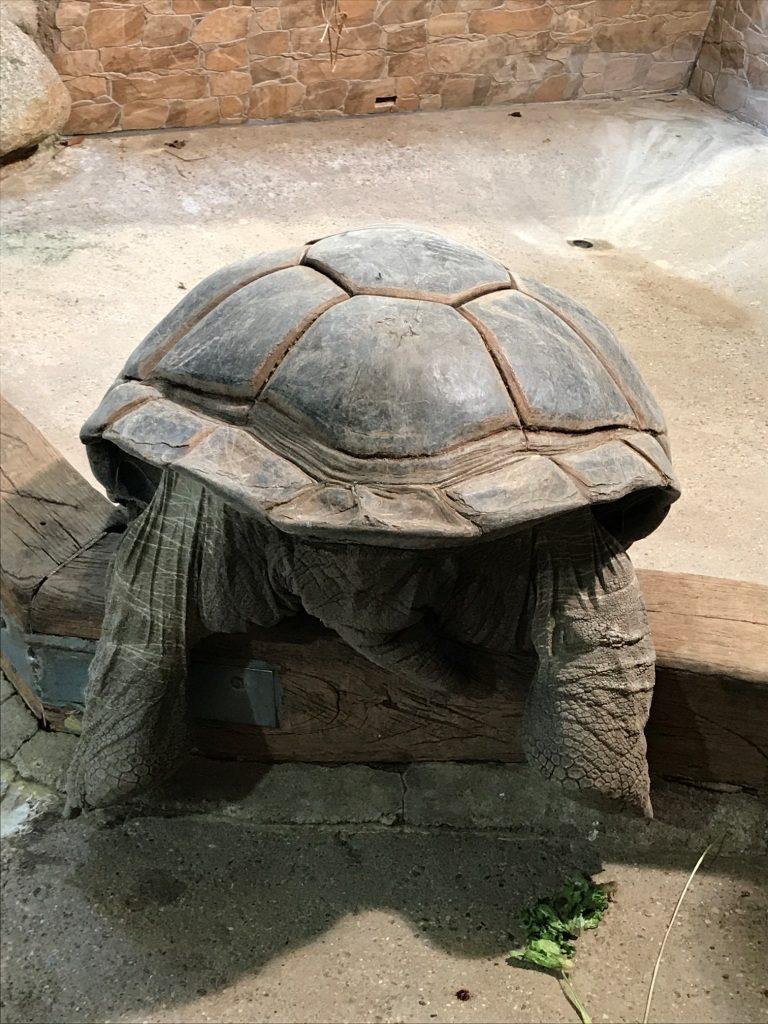Zoo Osnabrück mit Kindern - Schildkröte