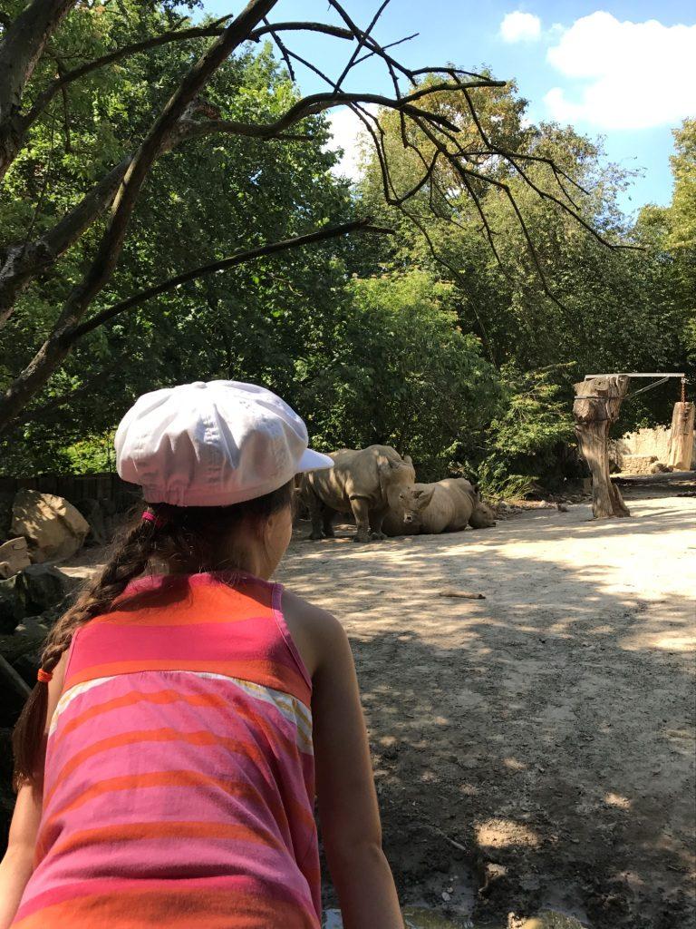 Zoo Osnabrück mit Kindern - Nashorn