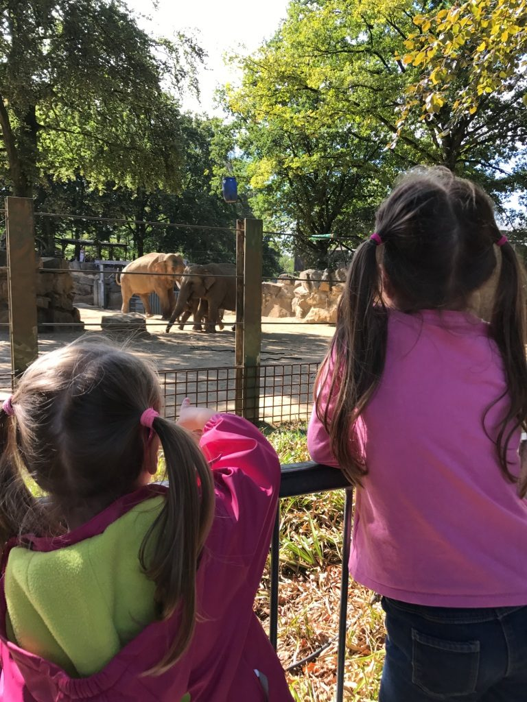 Zoo Osnabrück mit Kindern - Elefanten