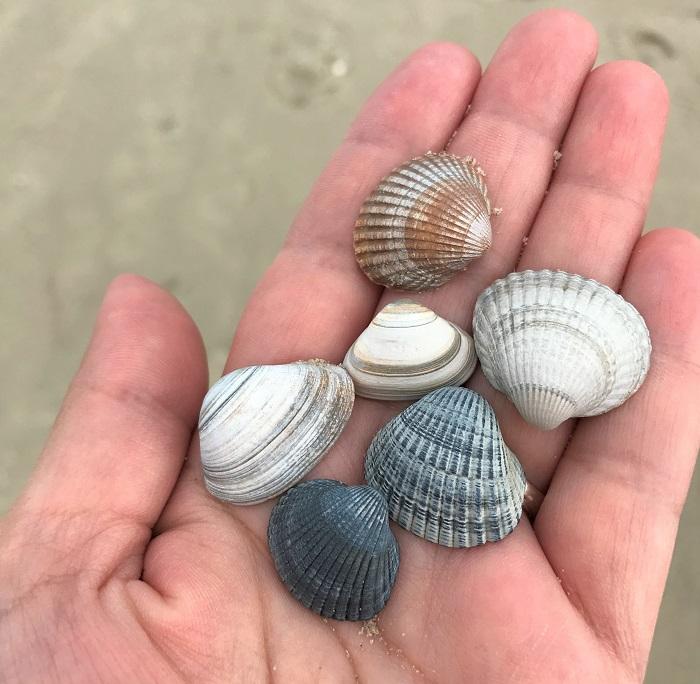 Urlaub auf Juist mit Kindern - Muscheln sammeln am Strand