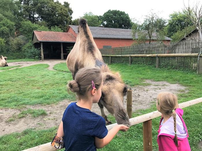 30am30 - 30 schöne Momente im August 2020 - Tierpark, Kamel füttern