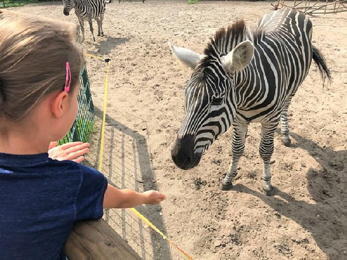 30am30 - 30 schöne Momente im August 2020 - Tierpark, Zebra füttern