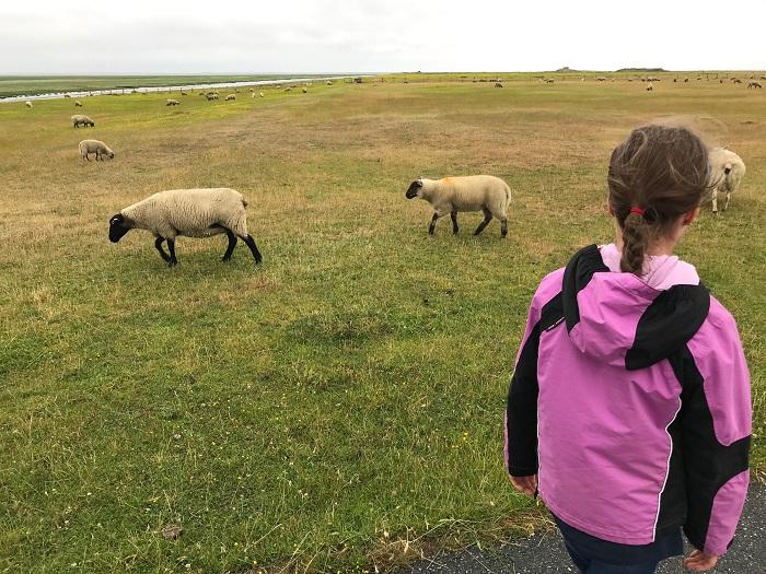 Nordsee mit Kindern - Urlaub in Friedrichskoog:   Spaziergang am Deich zwischen Willi dem Indoor-Spiele-Wal und der Seehundstation