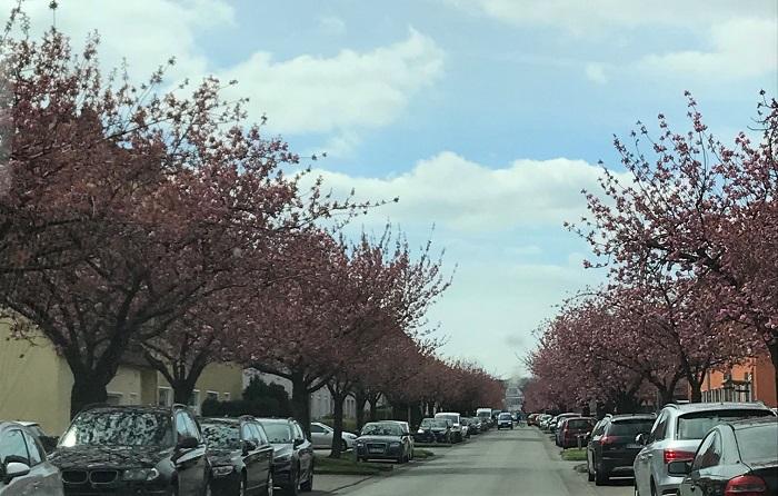 30am30 - 30 schöne Momente im April 2021 - Kirschbäume