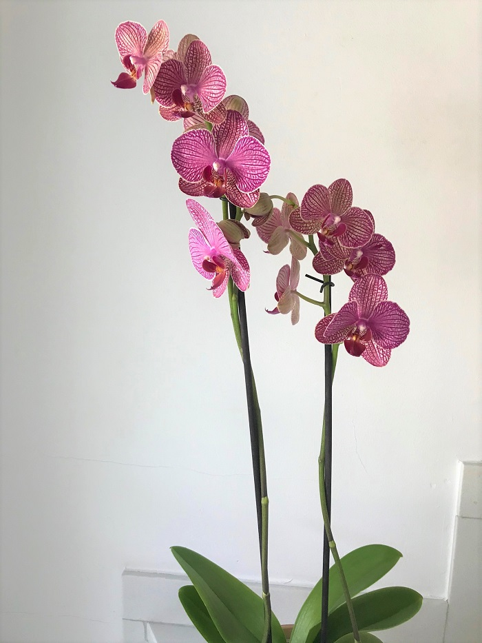 30am30 - 30 schöne Momente im April 2021 - Orchidee