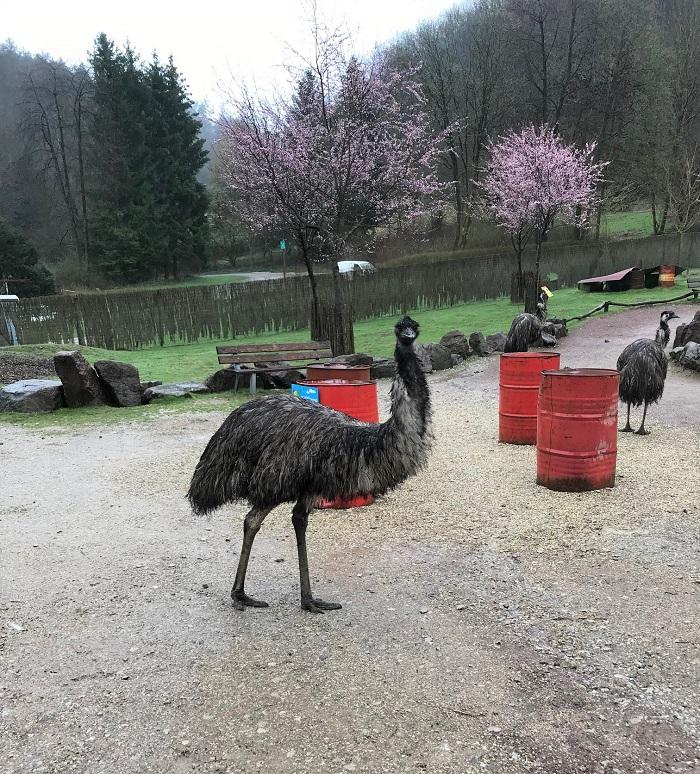 30am30 - 30 schöne Momente im April 2021 -  Vogelpark Heiligenkirchen
