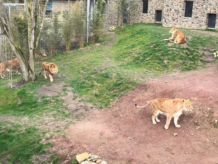 30am30 - 30 schöne Momente im April 2021 - Zoo Osnabrück
