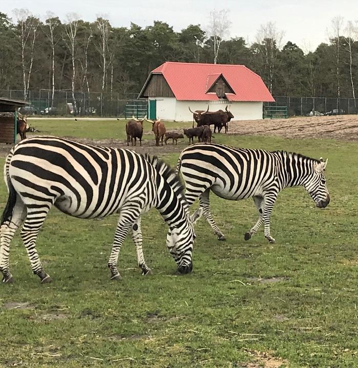 30am30 - Safaripark Stukenbrock