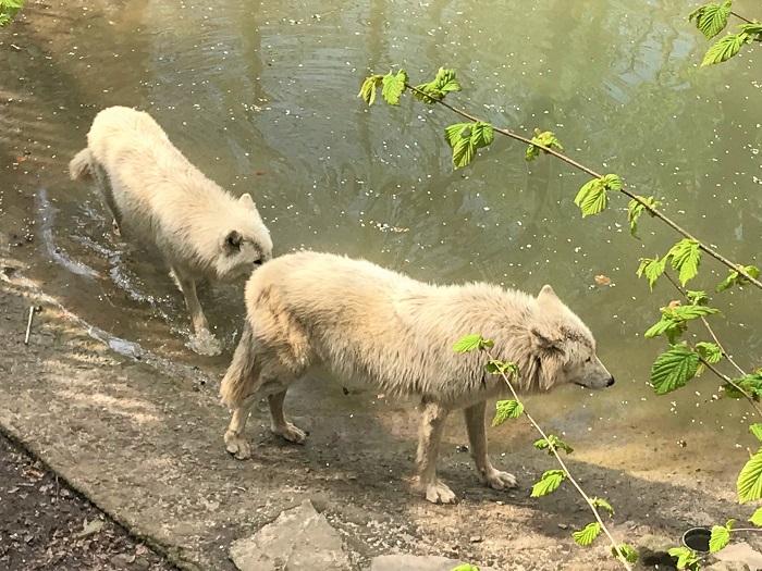 30am30 - 30 schöne Momente im Mai 2021 - Zoo Osnabrück