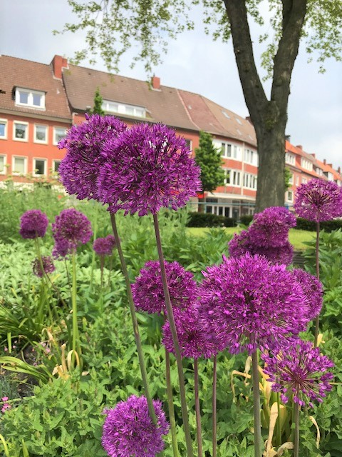 30am30 - 30 schöne Momente im Juni 2021 - lila Blumen